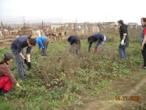 Freiwillige bei der Arbeit