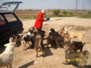 Fütterung herrenloser Hunde