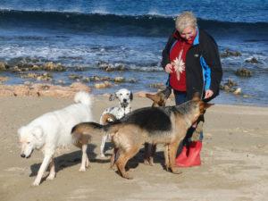 Italien Dezember 2009 mit Nessie, Bonsai und Felicia
