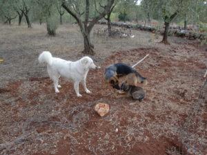 Italien September 2009 mit Nessie und Felicia