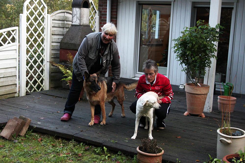 Mensch und hund glücklich zusammen